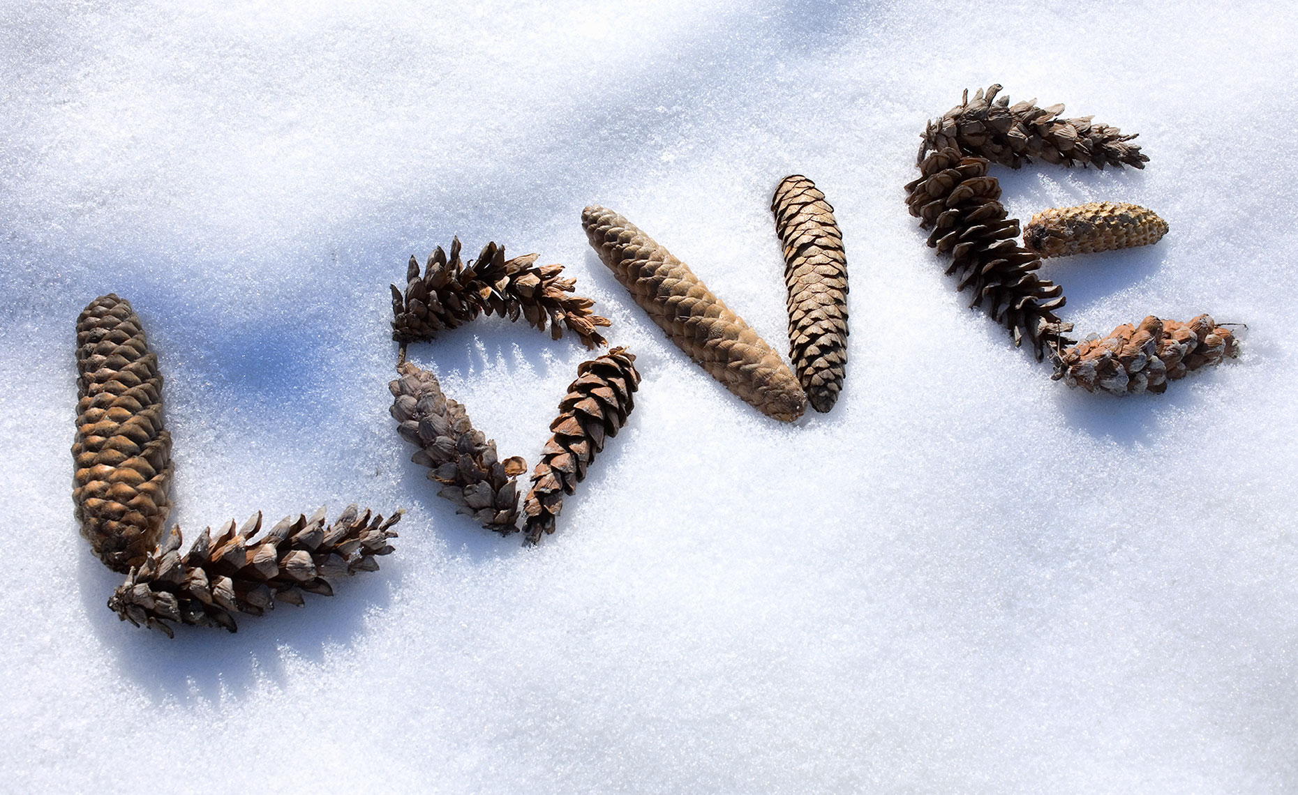 Pinecones love in snow